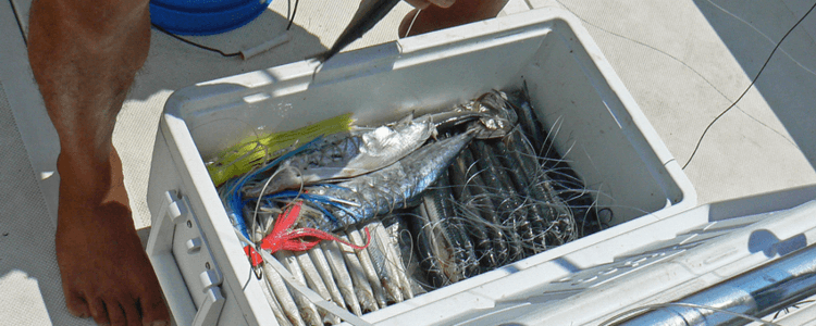 Panamax supplies first class bait and gear for every charter trip.